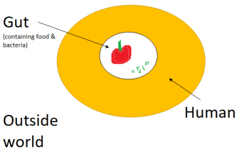 humans are doughnut-shaped 3